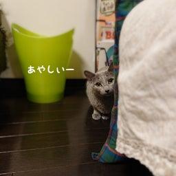 画像 1才違いの姉妹猫のひなこちゃんとさくらちゃん♡ の記事より 5つ目