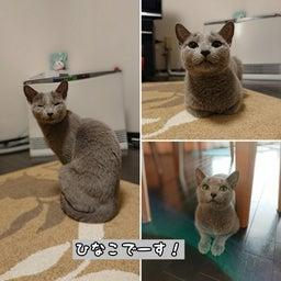 画像 1才違いの姉妹猫のひなこちゃんとさくらちゃん♡ の記事より 2つ目
