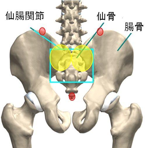 腰痛の隠れ原因。。。仙腸関節障害・炎 | baguのブログ