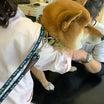 保護犬たちの医療ケア