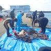 和歌山県田辺市周辺の地元ダイビング業組合で海底清掃の画像