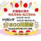 お誕生日月のわんちゃん・ねこちゃん限定☆の記事より