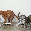【連載】おウチの収納.comさんでご飯まわりの愛用品を紹介の画像