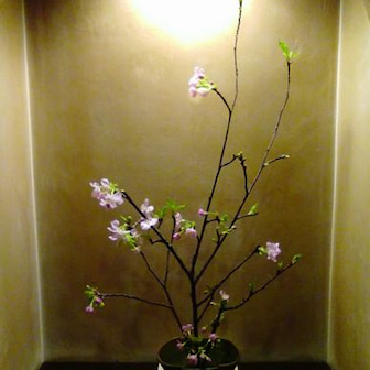 『桜、初物ですよ!』