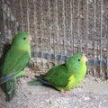 Parrot Paradiseの日々