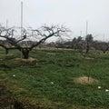 あったか桃農園2