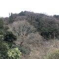 冬木立(鎌倉広町緑地)
