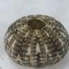 ウニ殻の画像