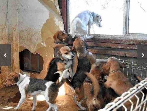 飼育 崩壊 犬 多頭