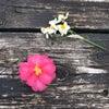 やっぱり花が好きの画像