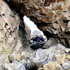 【島部】東龍島 島をぐるっと一周&肚臍洞 Tung Lung Islandの画像