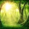 残席あり♪2/28開催!ZOOMお話会「現実を魂の望みに近づける」の画像