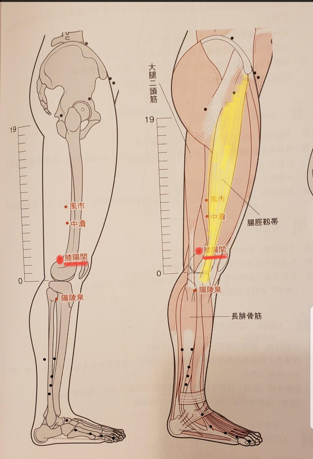 妊活のツボ(膝陽関)