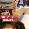 パピーパーティー開催のお知らせ☆の画像