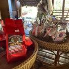 【中編】タイ・チェンマイ紀行 農業体験の現場見学編の記事より