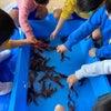 みどりかわい幼稚園さまでおもしろすいぞくかん開催していただきましたの画像