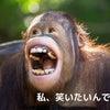 私、笑いたいんです!の画像