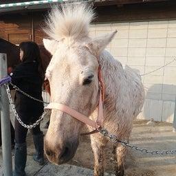 画像 馬たちの前髪事情 の記事より 2つ目