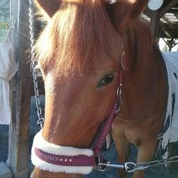 画像 馬たちの前髪事情 の記事より 3つ目