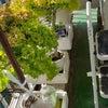 今のベランダ菜園の画像