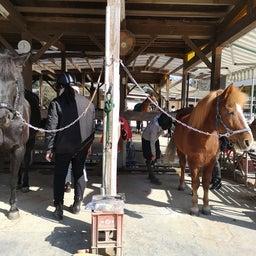 画像 手入れ講習会と馬装のお手本✨ の記事より 2つ目