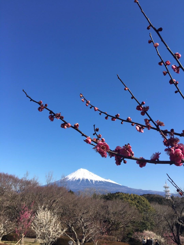 富士山と・・・!!
