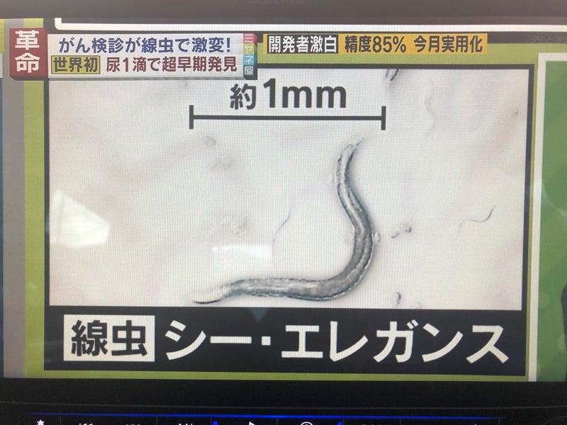 線 虫 が ん 検査
