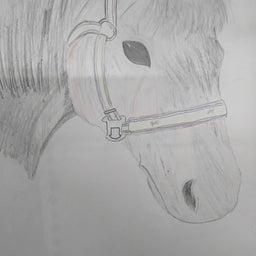 画像 明石乗馬協会の日常 の記事より 3つ目