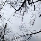 市民公園の天気と占い20.2.13の記事より