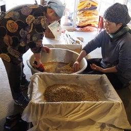 画像 麦麹作り の記事より 7つ目
