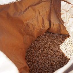 画像 麦麹作り の記事より 13つ目