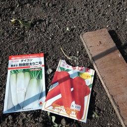 画像 春白菜と春大根と人参と の記事より 3つ目