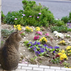 春が待ち遠しいなあ!の画像
