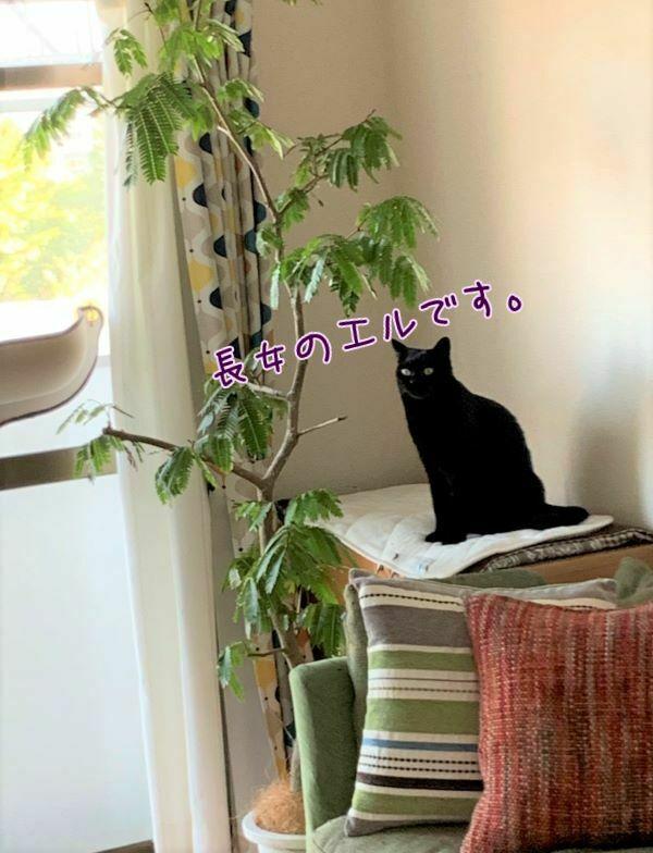 黒猫エルさんの画像