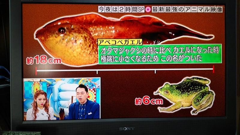 あべこべカエル