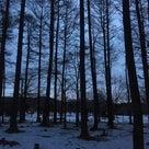 冬の森のコーチング報告の記事より