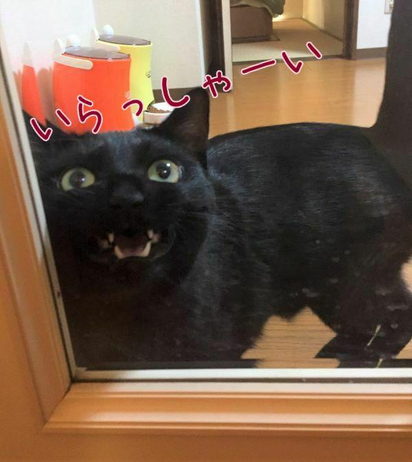 ペットシッターを出迎える黒猫ハンナさんの画像