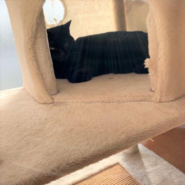 キャットタワーで寝るエルさんの画像