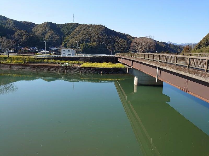 佐川町 菜の花畑
