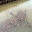 2/16 雨で濁水流入が始まっていますの記事より