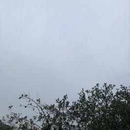 画像 西東京市の天気と占い20.2.16 の記事より 1つ目