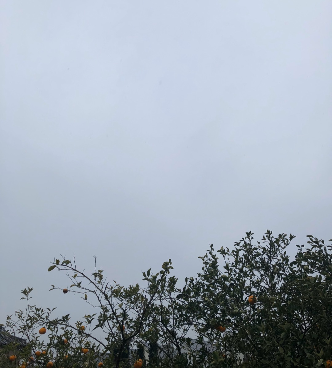西東京市の天気と占い20.2.16の記事より