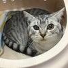 猫のお泊まりの画像