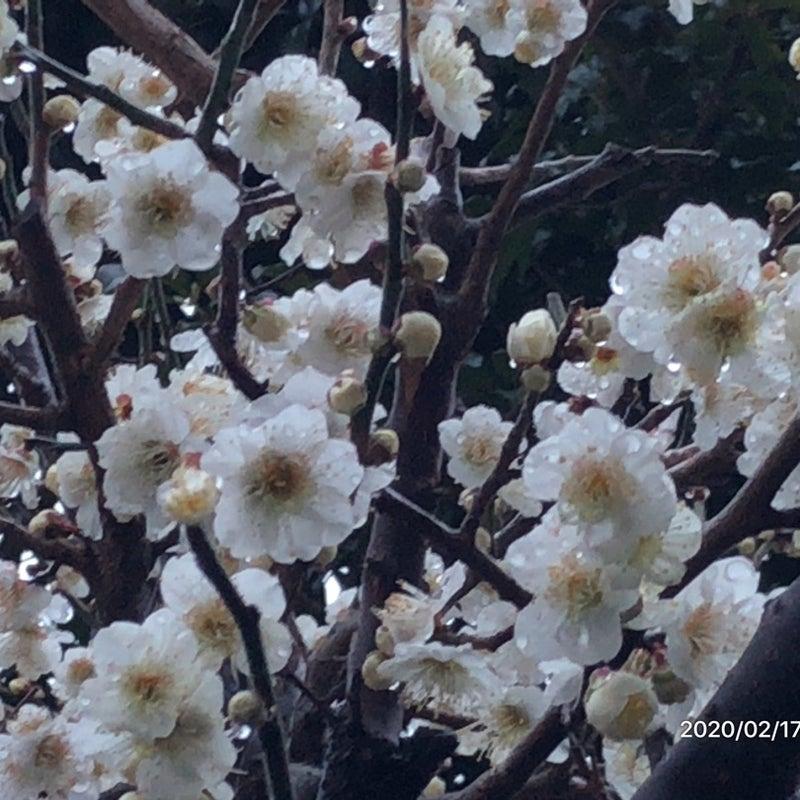 大島 康徳 ブログ