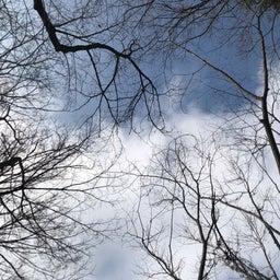画像 向台公園の天気と占い20.2.17 の記事より 5つ目