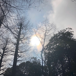 画像 向台公園の天気と占い20.2.17 の記事より 4つ目