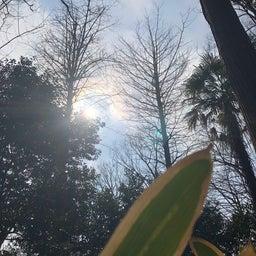 画像 向台公園の天気と占い20.2.17 の記事より 2つ目