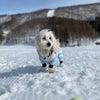愛犬と雪遊びの画像