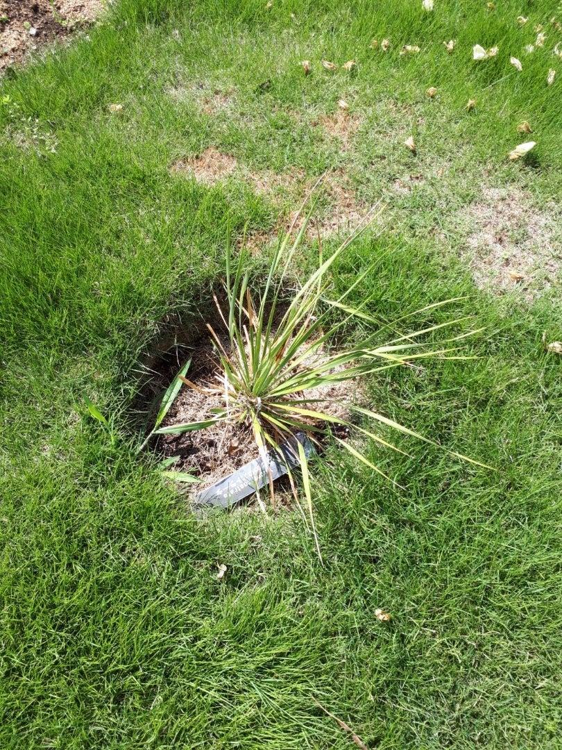 芝生 根 切り