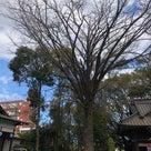 田無神社の天気と占い20.2.19の記事より
